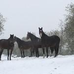 Inverno a Casafrassi